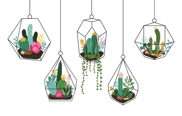 Succulents and cactuses in glass florarium for home interior set