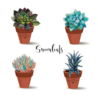 Succulents in clay pots