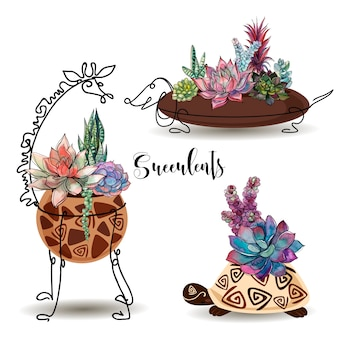 Succulents in decorative pots. set.