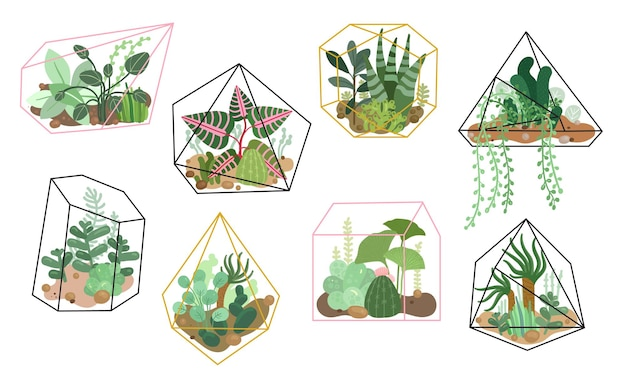 Суккуленты. стильный цветочный декор, домашний сад. современный интерьер, натуральная отделка, посадка кактусов. набор изолированных растительности. иллюстрация комнатное растение цветочные, ботанические посадки растительности