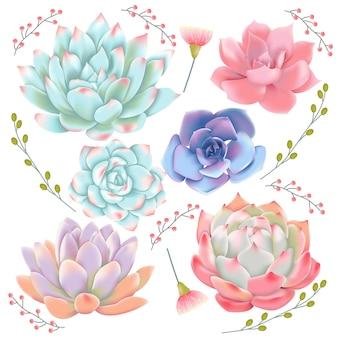 Succulents vector