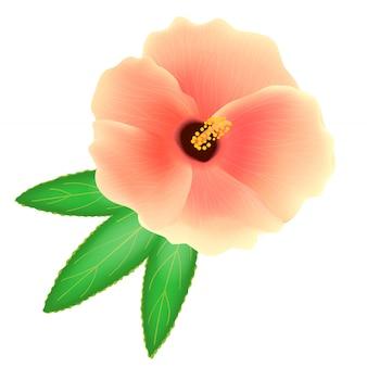 흰색 배경에 수단 장미 꽃입니다. roselle 또는 sabdariffa hibiscus. 현실적인 그림. 현실적인 벡터 일러스트 레이 션.