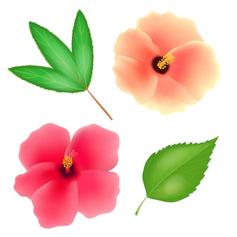 흰색 배경에 수단 장미 꽃입니다. 잎을 가진 roselle 또는 sabdariffa hibiscus. 현실적인 그림.