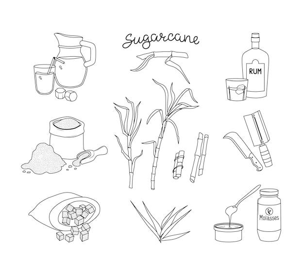 사탕수수와 그 제품 세트. 럼, 주스 및 당밀. 개요의 벡터 일러스트 레이 션.