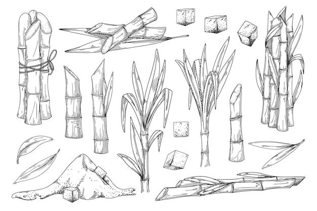 サトウキビ。天然有機甘味料の収穫のイラスト。サトウキビ工場、茎の束、茎と葉、甘いスパイスキューブとパウダー成分刻まれたスケッチの背景に設定