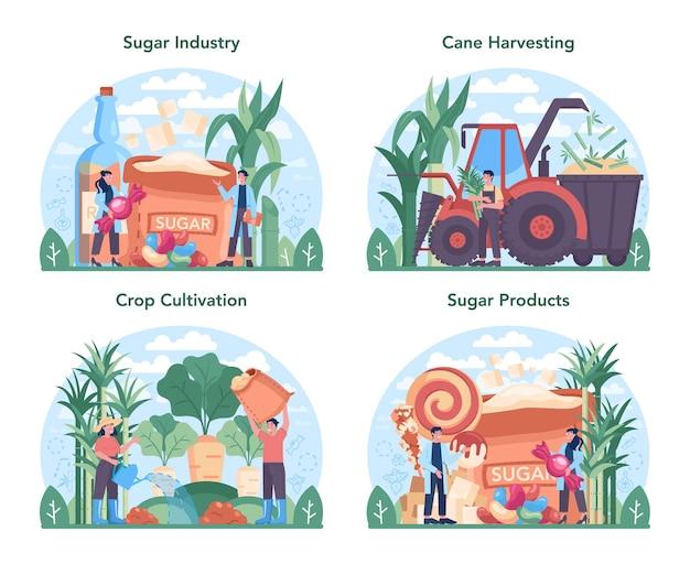 설탕 생산 산업 세트입니다. 평면 벡터 일러스트 레이 션