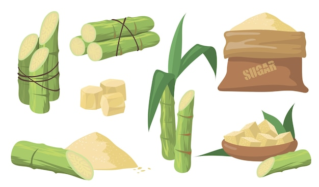 Sugarcane and sugar set. pack of green stems, plants with leaves, sack with brown sugar isolated on white background. illustrations collection for agriculture, rum, liquor production concept.