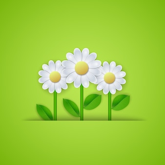 Summer floral background with daisy flowers.