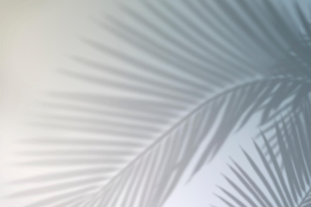 Vettore di sfondo sfumato estivo con ombra foglia