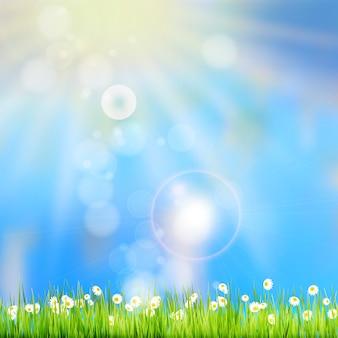 太陽の光と背景の多重空で夏の草。
