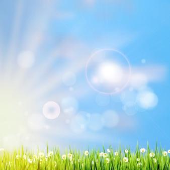 太陽の光で夏の草。