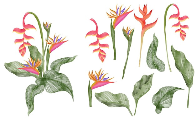 夏の緑の熱帯の葉とストレリチア分離クリップ アート水彩