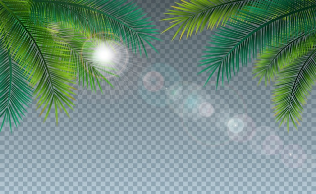 Summer illustration with tropical palm leaves on transparent