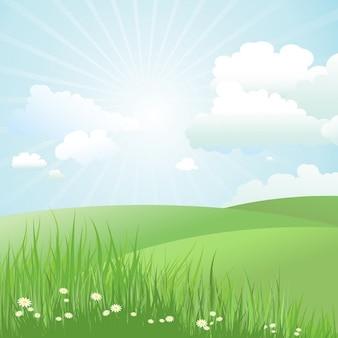草の中にヒナギクと夏の風景