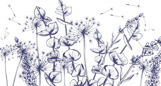 Summer lavender flowers line art
