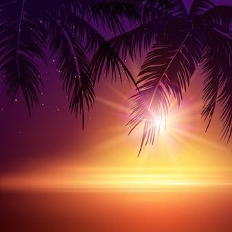 夏の夜。夜のヤシの木。