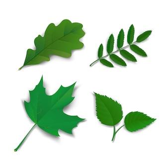 여름 오크 메이플 애쉬 자작 나무 잎