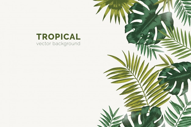 Summer paradise background with exotic palm tree branches and tropical monstera leaves.