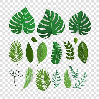 Summer season exotic leaves vector collection isolated on transparent