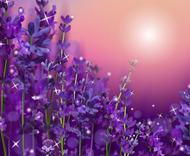 紫のラベンダーの花に沈む夕日。香水、健康製品のための香りのよい、咲くバイオレットラベンダー