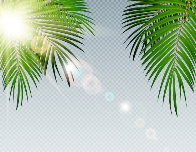 Summer time palm leaf with sunbeam on transparent vector background illustration