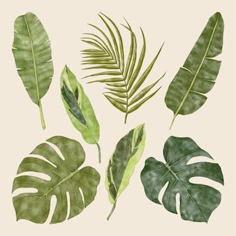 夏の熱帯のエキゾチックな緑のモンステラの葉ヤシとバナナの葉