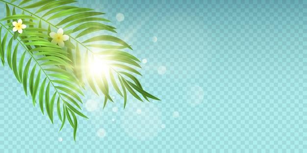 青い透明な背景にヤシの葉とサンバースト。ライトボケ