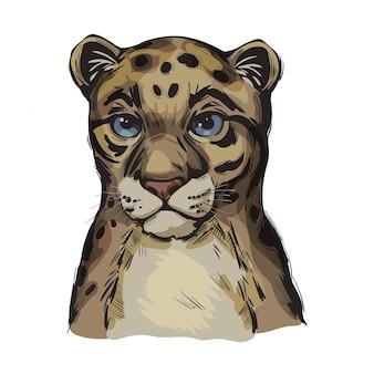 Зондовый дымчатый леопардовый ребенок, портрет экзотического животного, изолированных эскиз. рисованной иллюстрации.