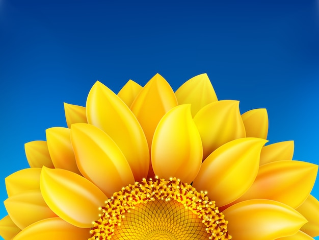 Предпосылка солнцецвета и голубого неба.