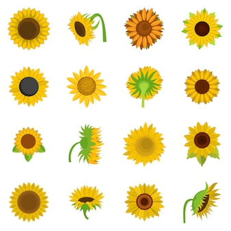 Sunflower blossom icons set vector isolated