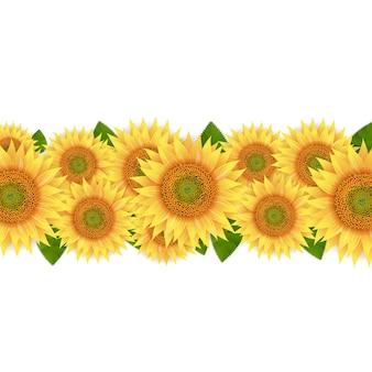 Sunflower border isolated