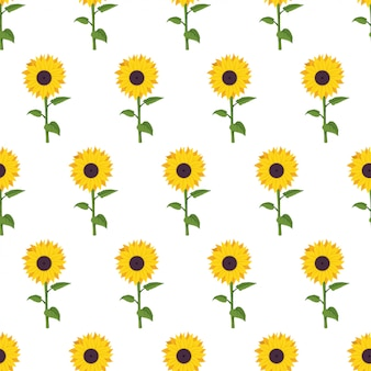 Sunflower cartoon seamless pattern on white background.