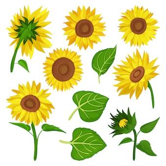 Мультфильм подсолнечника установить значок. иллюстрация иллюстрация цветок на белом фоне. мультфильм набор иконок подсолнечника.