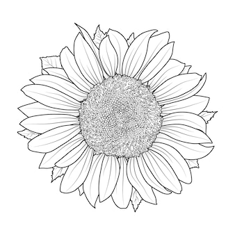 Sunflower for coloring book