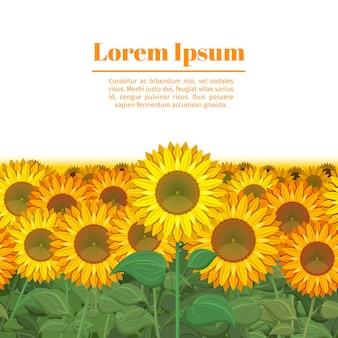 해바라기 밭. 해바라기 그림의 행입니다. 태양 꽃과 함께 끝없는 필드