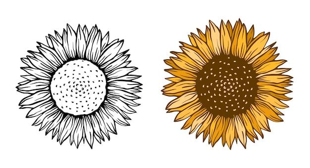 해바라기 꽃 자연 식물 그림 개념