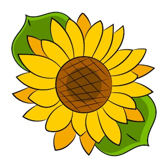 Sunflower flower isolated, vector illustration