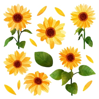 Sunflower illustration set in hand painted style