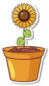 A sunflower in a pot sticker