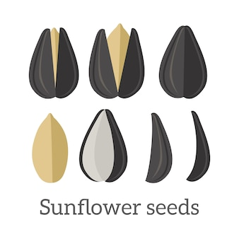 Sunflower seeds vector illustration in flat design