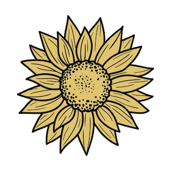 Sunflower vector illustration isolated on a white background