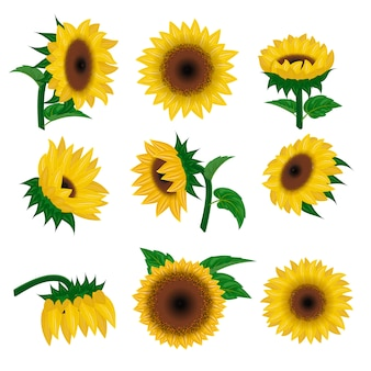 Sunflower vector yellow summer flower nature, flower and floral blossom plant illustration