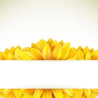 Sunflower on white background.