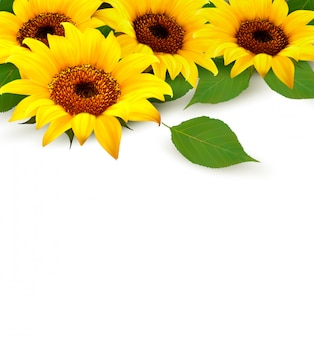 Sunflowers and leaves with copyspace.