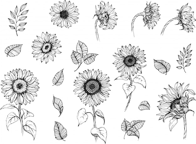 Sunflowers line art set