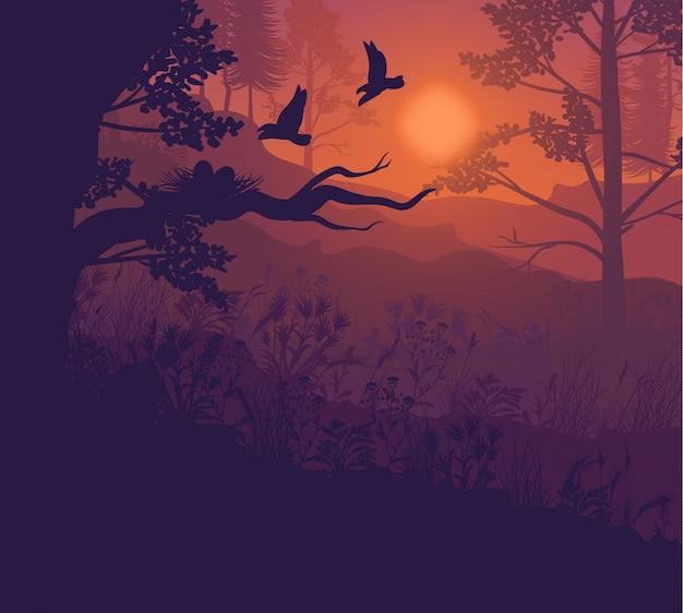 Восход солнца лесной пейзаж
