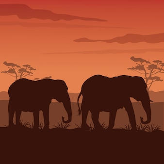 Sunset african landscape with silhouette elephants walking