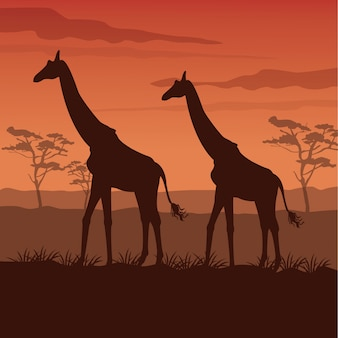 Sunset african landscape with silhouette giraffes standing