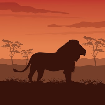Sunset african landscape with silhouette lion standing