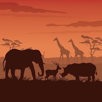 Sunset african landscape with silhouette wild animals